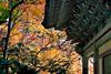 Bulguksa temple 佛國寺 (MelindaChan ^..^) Tags: gyeongju skorea 韓國 慶州 bulguksa temple 佛國寺 maple 楓葉 plant leaf leaves autumn fall foliage korean history heritage rooft rooftop tile chanmelmel mel melinda melindachan