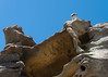 Sidney (Anselm11) Tags: vogel bondybeach australien sidney