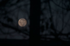 """""""Cold Moon"""" decending at dawn (chesbayview) Tags: elements fullmoon supermoon"""