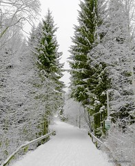 Winter can look like this too 😁 (evakongshavn) Tags: sundaylights winter winterwonderland winterishere snow whitetrees greenforest whiteforest white new light trail walk hike forest forestbathing wald tree trees arbre paysage landscapephotography landscape landschaft norsknatur earthnaturelife natur naturerocks nature naturphotography natureart beautyinnature naturbilder naturescape naturelover naturelovers naturephotography fantasticnature naturaleza naturescenes scenery serenity serene greenandwhite green colors photoshoot photooftheday unlimitedphotos photography photos photo photooftoday fineartphotography outdoorsphotography outdoorphotography outside outsidepictures outhiking winterlandscape