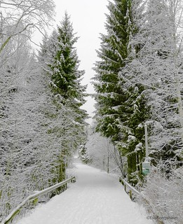 Winter can look like this too �