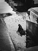 (georgekells) Tags: water harbour docks concrete tonalcontrast riverlagan dark textures reflections monochrome blackandwhite uncropped belfastlough city metal rust industrial ulster northernireland
