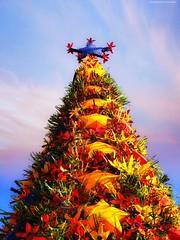 "O U T D O O R | Xmas Deco (NadzNidzPhotography) Tags: xmasdeco nadznidzphotography outdoor smileonsaturday ""xmas deco"" christmas christmastree"