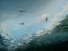 From beneath (2) #toronto #ripleysaquarium #aquarium #fish #latergram (randyfmcdonald) Tags: fish ripleysaquarium latergram aquarium toronto