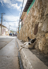 CUBA2017_100 (Dylon87) Tags: daytrip friends family memories vacation fun great gibara fishing town getaway bed breakfast travel holguin cuba dog street lay laying chill side curb pose posing photo pic photographer photography teamcanon canon shotoncanon canoncanada