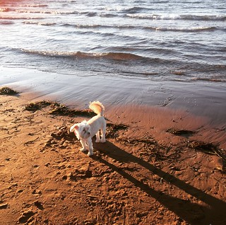 Puppy and the sand