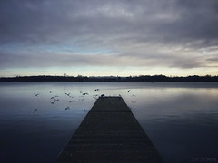 morning on the lake (Jon Downs) Tags: lake birds gulls seagulls jetty willen mk miltonkeynes morning mood