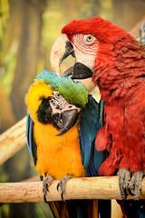 _and-i'll-scratch-yours (Don Pedro de Carrion de los Condes !) Tags: donpedro d700 lorri kleurrijk evenjeuken jeuk insecten tuincentrum vriendschap papegaai papegaaien vogels tropisch