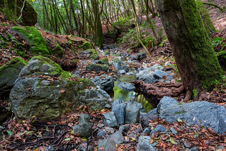 Little Carson Creek