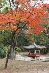 Autumn leaves in the Secret Garden in Seoul, Korea (mbphillips) Tags: 한국 韓國 서울 首尔 canon80d sigma1835mmf18dchsm mbphillips asia 亞洲 fareast アジア 아시아 亚洲 secretgarden korea 韩国 southkorea 대한민국 republicofkorea 大韓民國 geotagged photojournalism photojournalist autumn otoño 秋天 가을 seoul capital 首都 수도