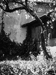 Lost House (yoannpupat) Tags: bulgaria a7r bw
