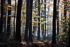 La forêt de lumière (Excalibur67) Tags: nikon d750 sigma 70200f28apoexdgoshsm paysage landscape forest foréts arbres trees lumière automne autumn brume mist