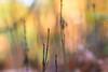 DSC_1129.jpg (ruud.snijders) Tags: forrest rozendaal paddestoelen montfort fall bos mushrooms herfst