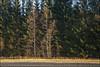 20171019. Männiku. 9114. (Tiina Gill (busy)) Tags: estonia outdoor fall autumn raplamaa forest tree sidelight nature