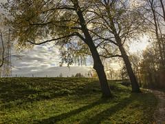 Scheve bomen (Dimormar!) Tags: hoogvlietrotterdam zuidholland nederland herfst scheef bomen tegenlicht autumn