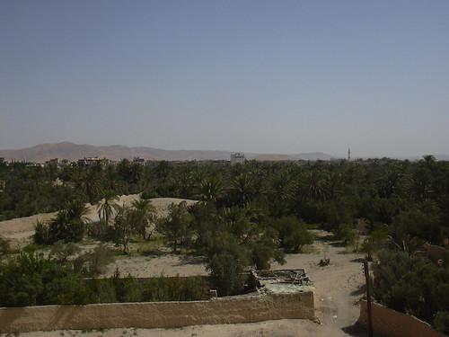 Palmyra (Tadmor), Blick auf die Palmenoase vom Baal-Tempel