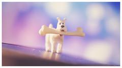 Bone! (DeanoNC) Tags: macro dog bone soundslike stonerhymingzone macromondays milou snowy