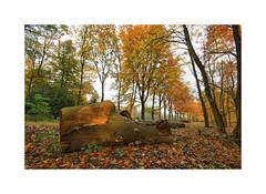 Autumn Liesbos (cees van gastel) Tags: ceesvangastel canoneos550d autumn herfst bomen trees liesbos breda liesbosbreda herfstkleuren autumncolours natuur nature landscape landschap noordbrabant nederland netherlands