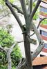 IMG_6768 (trevor.patt) Tags: redbreasted parakeet nesting bird singapore bishan sg