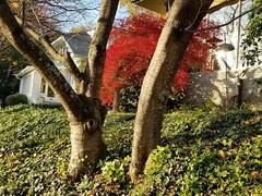 Walks Piedmont Park - 38 (Laura Grace) Tags: 2017 afternoon atl atlanta autumn beauty fall ga georgia november solowalkshikes virginiahighland walksandhikes