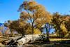 Owens Valley-95 (Denise Noelle Photography) Tags: owensriver bishopca sierranevadamountains monolake lonepine junelake mammothlakes