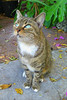 Key West (Florida) Trip 2016 2707Ri 4x6 (edgarandron - Busy!) Tags: cat cats kitty kitties cute feline