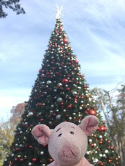 Dave and the giant tree (pianoforte) Tags: dallas dallastx arboretum dallasarboretum dallasarboretumandbotanicalgardens christmas 2017 christmas2017 pig dave travelingnongnome