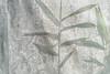 Moiré (Yuta Ohashi LTX) Tags: 網 mesh モアレ plant 植物 leaves 58mm f14 nokton ノクトン d750 nikon ニコン