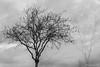 Brouillard (beatricedrevon) Tags: arbres vegetation motsclésgénériques brouillard leverdusoleil