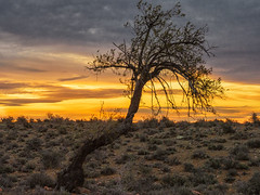 Sundown in the Great Karroo (Steppenwolf33) Tags: sky sundown karroo tree steppenwolf33 landscape southafrica desert