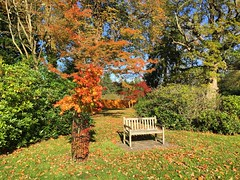 Autumn Bench (Marc Sayce) Tags: bench trees colours fall leaves lodge autumn october 2017 alice holt forest hampshire wrecclesham farnham surrey south downs national park