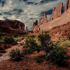 Park Avenue (Vasil1978) Tags: ngc nature nationalpark landscape desert deadtree sunset sandstone rocks utah nikon