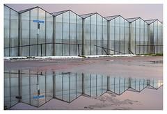 Reflections from the twilight zone (leo.roos) Tags: hothouses greenhouses kassen westland casembrootlaan reflection weerspiegeling twilight sunset zonsondergang glass glas meyerprimotar5028 1959 exakta a7rii week502017 dyxum challenge darosa leoroos day2
