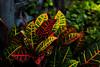 ... (..ChEn..) Tags: nature plant garden leaf colour color delight