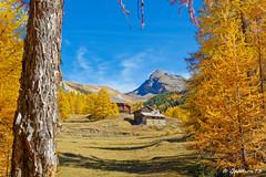 Vallée de Ceillac - Queyras (Lumières Alpines) Tags: didier bonfils goodson goodson73 dgoodson queyras ceillac rando automne jaune arbre ciel bleu flickr lumieres alpine europa alpes outside
