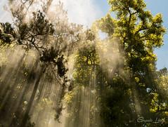 Rayos (Fotos Gerardo López) Tags: rayos lights tree sun smoke argentina humo arbol fujifilm fuji x t20 xt 20 xt20 18 55 28