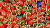 I know that you like Reds... (ATHOS TH. On and Off) Tags: red rosso rot tomatoes vegetables