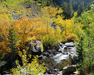 Fall Color along Bishop Creek, Sierra Nevada 10-17