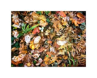 Forest Floor ~ Union Creek