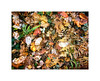 Forest Floor ~ Union Creek (Johnrw1491) Tags: color autumn fall oregon trees leaves leaf botany poetry haiku still life restaurant
