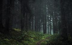 Alpine Forest (Netsrak) Tags: licht pflanze nadelbaum at österreich mittelberg kleinwalsertal natur mist fog