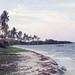 Coconuts, mangroves and pomoea, Mafia Island