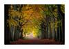 Beukendreef (jos.pannekoek) Tags: autumn herfst bergenopzoom zoomland brabant nederland 70200f4 70200 d500