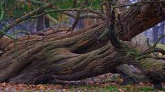 Tree (Tim @ Photovisions) Tags: nebraska beatrice tree wood park xt2 fuji fujifilm gagecounty forest hedge