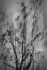 Blackbird (beelzebub2011) Tags: canada britishcolumbia vancouver multipleexposure icm intentionalcameramovement bw monochrome blackwhite troutlake