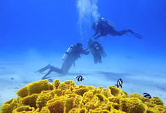 quadruple amputee man takes diving course 12 (KnyazevDA) Tags: disability disabled diver diving deptherapy undersea padi underwater owd redsea buddy handicapped aowd egypt sea wheelchair travel amputee paraplegia paraplegic