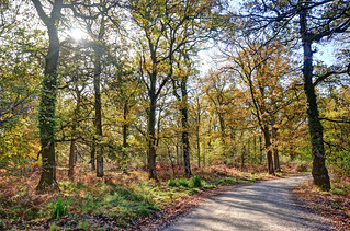 Forest of Dean, Gloucestershire