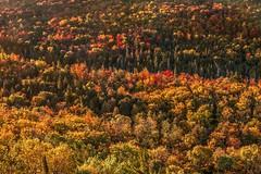 Autumn Carpet (Cole Chase Photography) Tags: fall michigan autumn