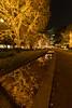 DSC05569_03 (ishizen) Tags: sony α7ii japan tokyo photo photoshoot photograph camera mirrorless a7ii sel1224g illumination イルミネーション 六本木 roppongi tokyomidtown midtown ミッドタウン