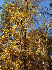 09 (emmess2) Tags: campiglia cinqueterre spezia autumn fall leaves
